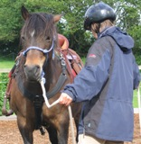 Understand Your Horse.  Horse handling practicing natural horsemanship online.